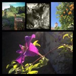 Better Smartphone (Android) Photography – Sarah Stephens