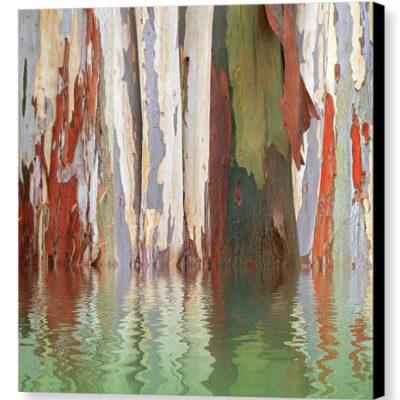 Eucalyptus Tree Bark Reflections - Photograph on Canvas