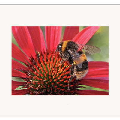 """Busy Bee - 5"""" x 7"""""""