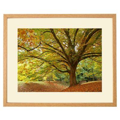Autumn's Majesty - Photograph by Gill Billington