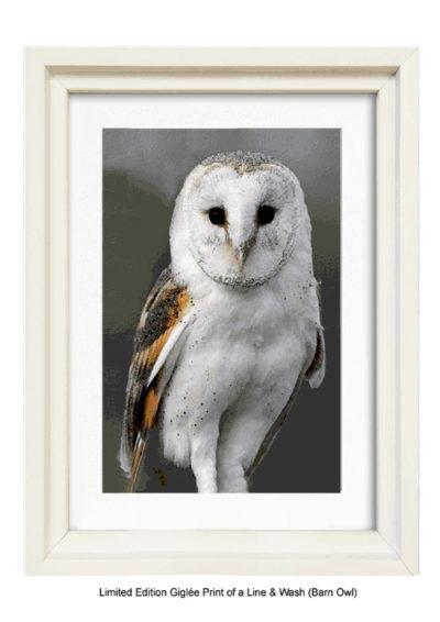 Barn Owl - By Gerald Bright