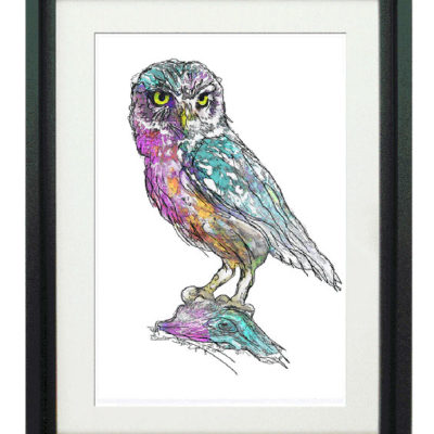 Ibis Owl